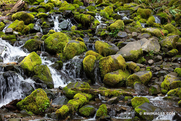 MOSSY ROCKS FOREST STREAM SOL DUC FALLS TRAIL OLYMPIC NATIONAL PARK WASHINGTON COLOR