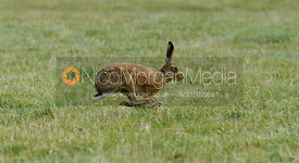 Here Hare Here - Cottesmore One Day Event 2015