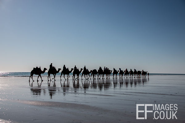 Cable Beach Camel Train Tour