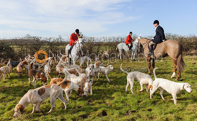 Fitzwilliam Huntsman George Adams and hounds at the meet