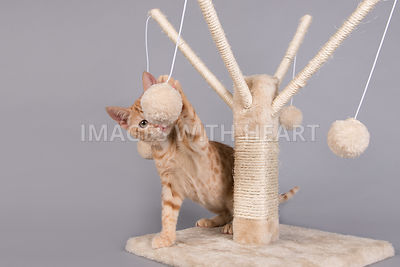 Kitten playing with ball toy