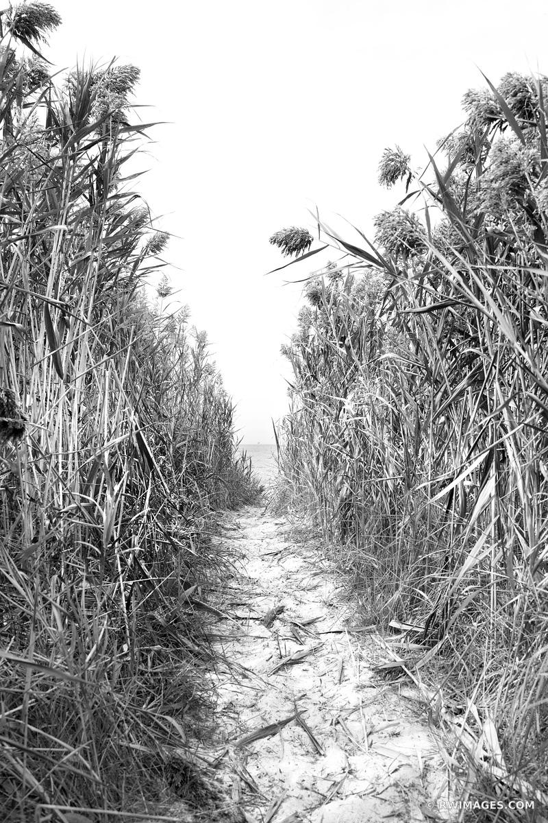 PATH TO THE BEACH ORLEANS MASSACHUSSETSS BLACK AND WHITE VERTICAL