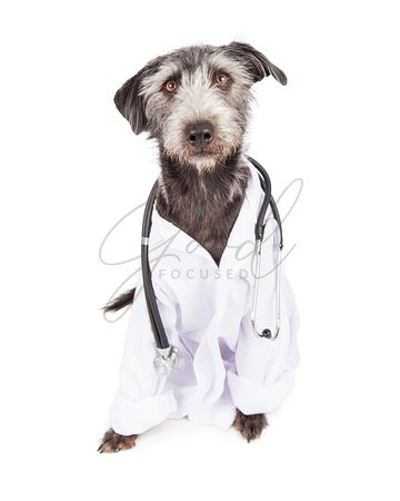 Dog Dressed As Veterinarian