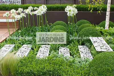 Agapanthus, Ball shaped, Bush, Buxus, Contemporary garden, Evergreen, Perennial, Perennial rhizome, Sphere shaped, Stair, Top...