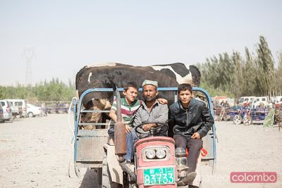 At Kashgar sunday livestock market, Xinjiang, China