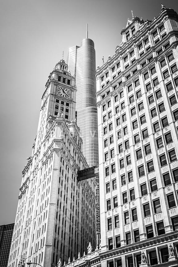 Chicago Wrigley Building and Trump Tower Black and White Photo