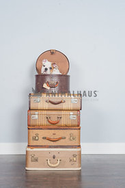 English bulldog puppy sitting in a stack of vintage luggage in the studio