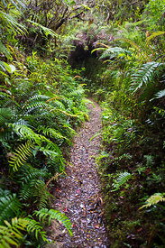 Sentier permettant d'atteindre le sommet des Blue Mountain, Jamaique / Trail to reach the top of the Blue Mountain, Jamaica