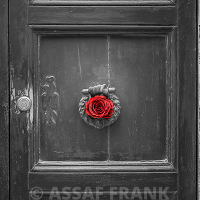 Red rose in door knocker, Mdina, Malta