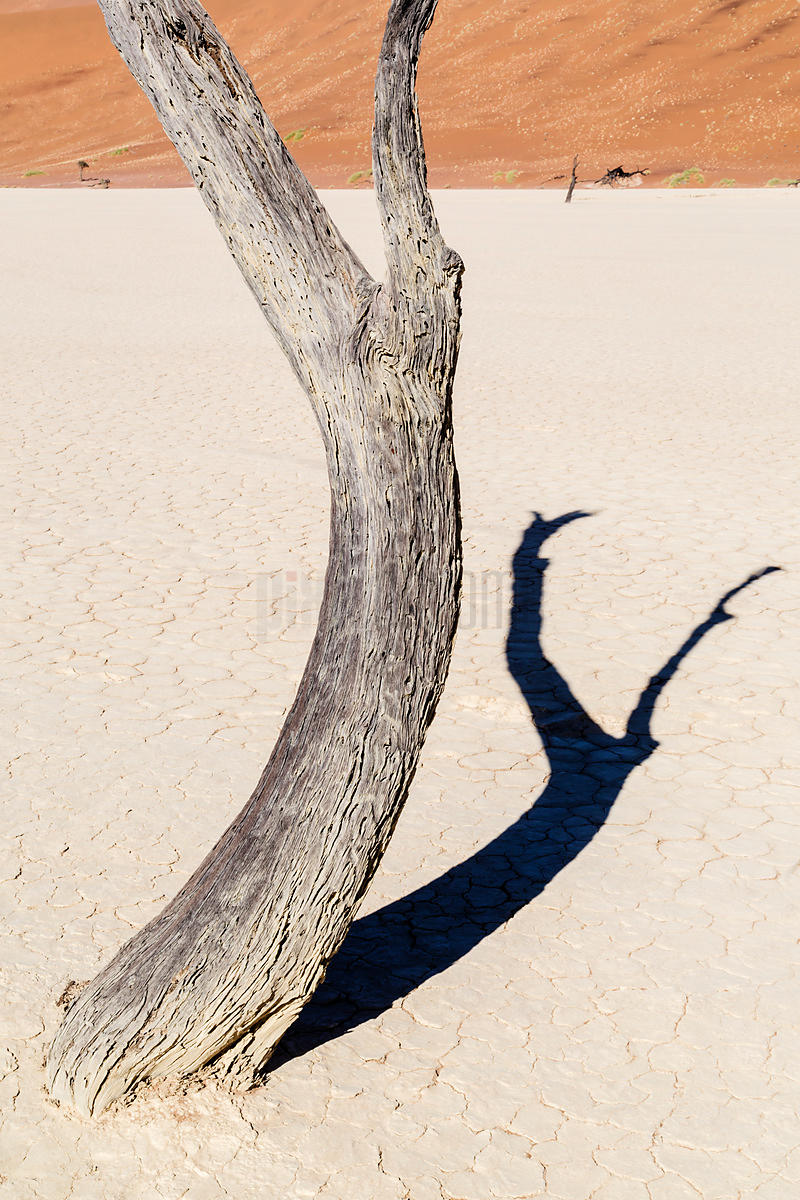Dead Tree Against a Dune Background
