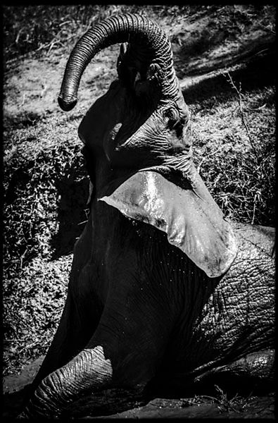 9411-Elephant_Laurent_Baheux
