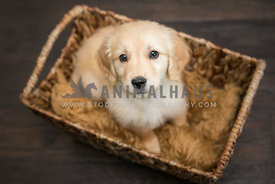 small puppy in a basket on the floor