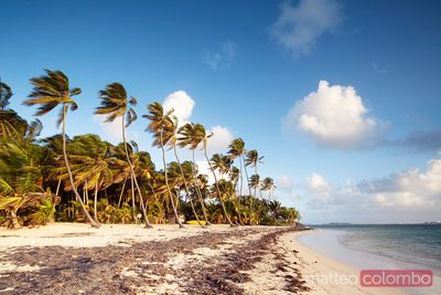 Deserted sandy beach with palms at sunrise Martinique Caribbean