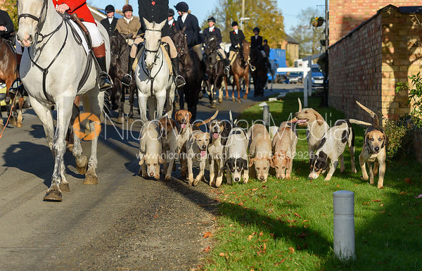 Hounds leaving the meet in Great Gidding