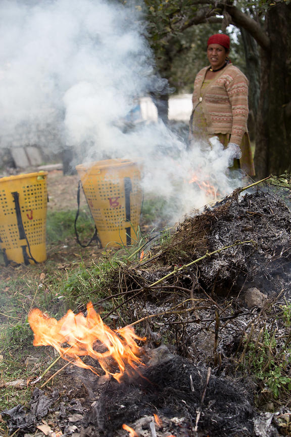 A woman burns waste from an apple harvest, Manali, India. Apples are a major crop in the Manali-Kullu region.