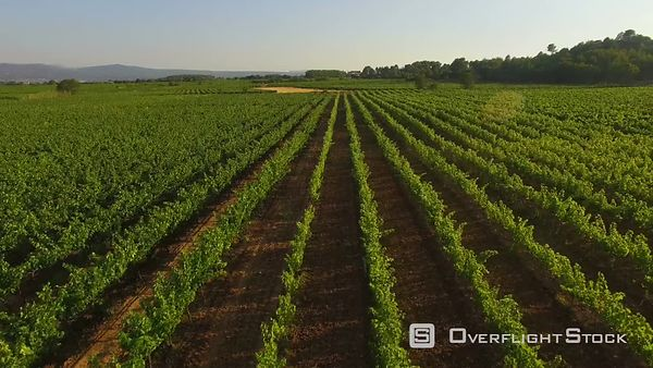 Drone Video French Vineyards Provence France