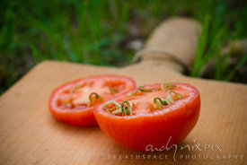 Organic tomato cut in half showing unusual sprouting of seeds inside the fruit. (Close-up macro view)