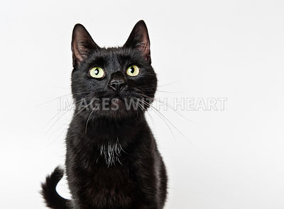 Black cat looking at camera