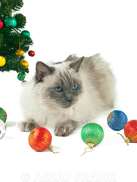 Cat and christmas baubles