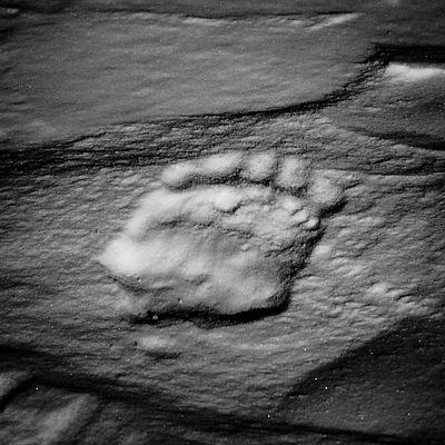 5690-Footprint_of_polar_bear_Baffin_Island_Canada_2016_Laurent_Baheux
