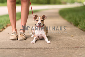 Small dog on leash laying at womans feet on sidewalk