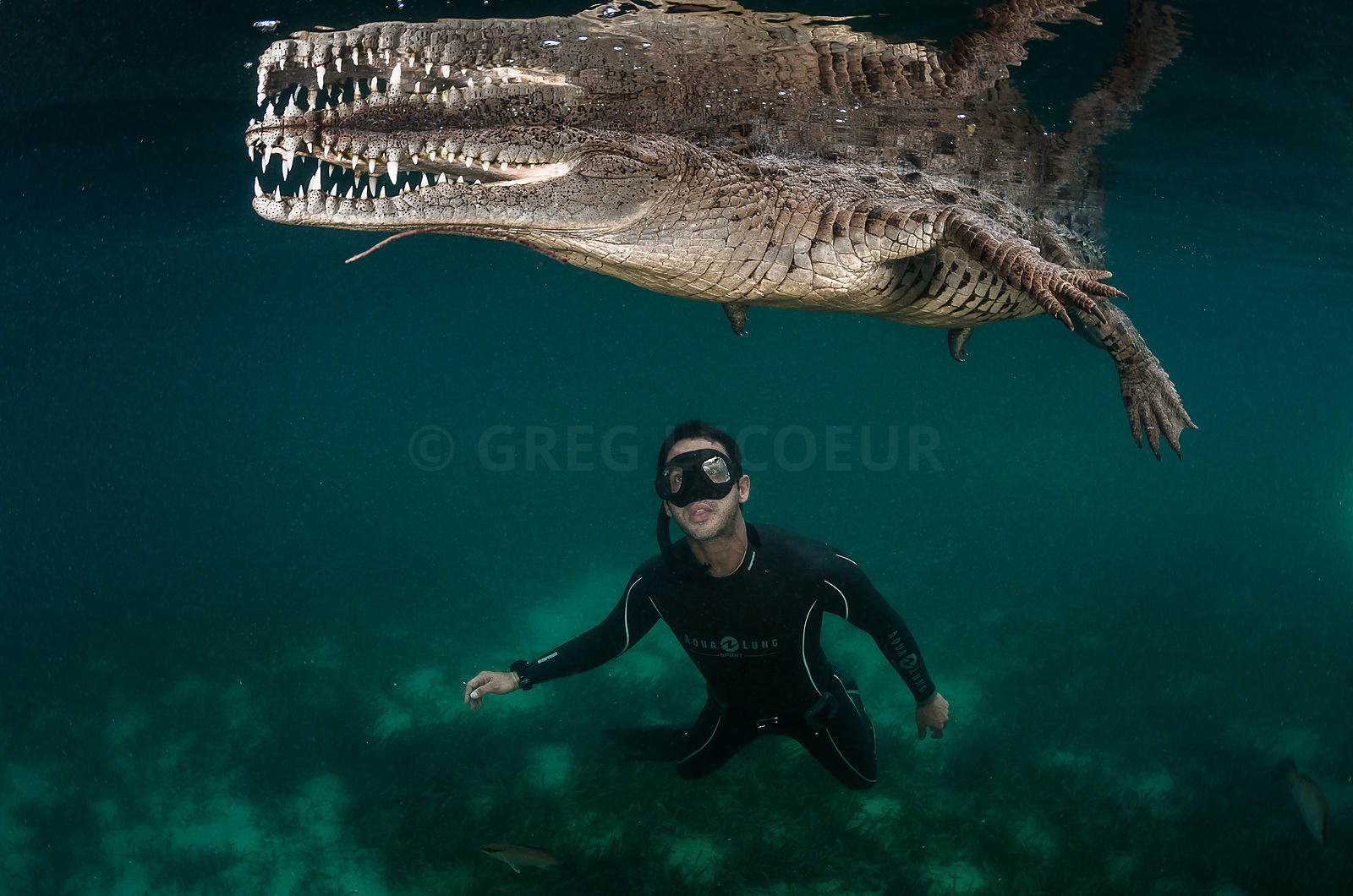 swimming with crocodile