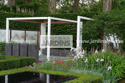 Buxus, Contemporary garden, Digital, Geometrical pool, Hedge, Low hedge, Pergola, Common Box, Rectangular pool