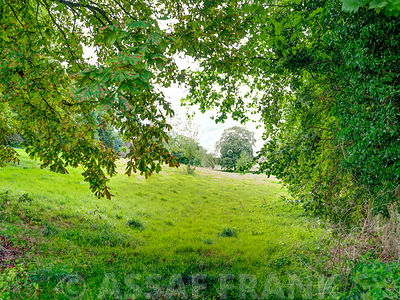 View of lush green meadows through trees, Cotswolds, Uk