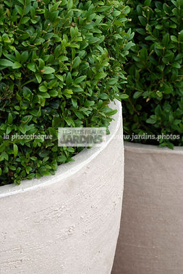Ball shaped, Buxus, Container, Contemporary, Contemporary garden, Pot, Sphere shaped, Topiary, Common Box, Digital