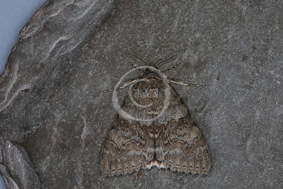 Moths of Flatford Mill