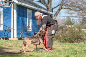 malinois shepherd mix protection training