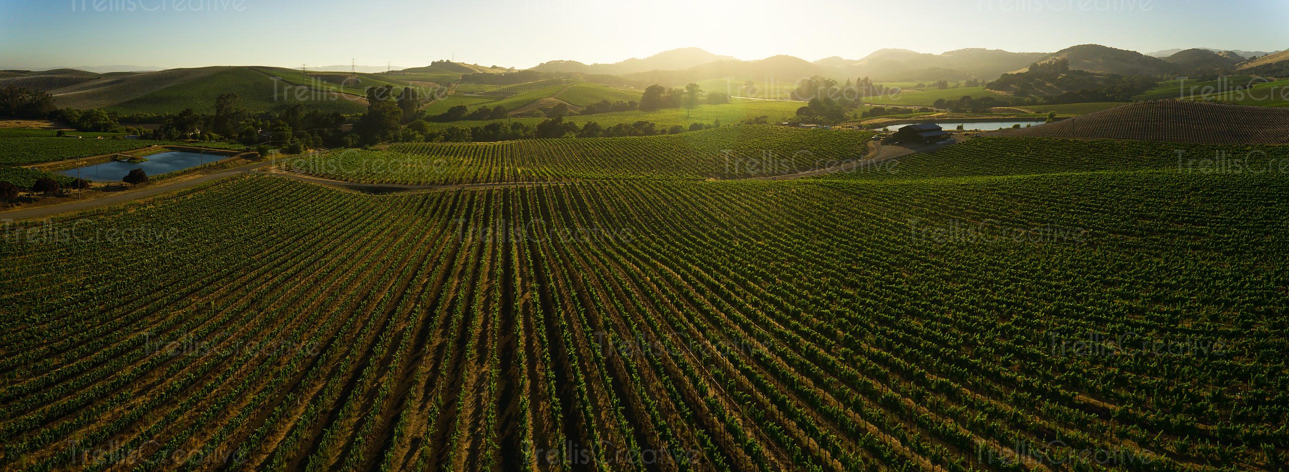Aerial view of a vineyard landscape in Napa valley