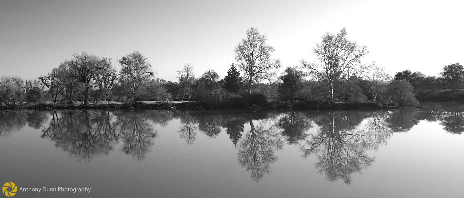 Trees on the River bank #2