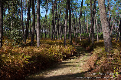 The Landes is the largest forest in Europe. The Paris Road crosses it during 80 miles.