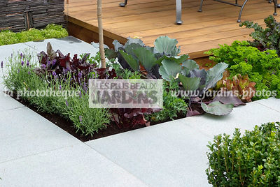 Allotment, Common lavender, garden designer, Mini potager, Mini Vegetable garden, Pavement, Salad, Small garden, Urban garden, Vegetable patch, Vegetable plot, Wooden Terrace,