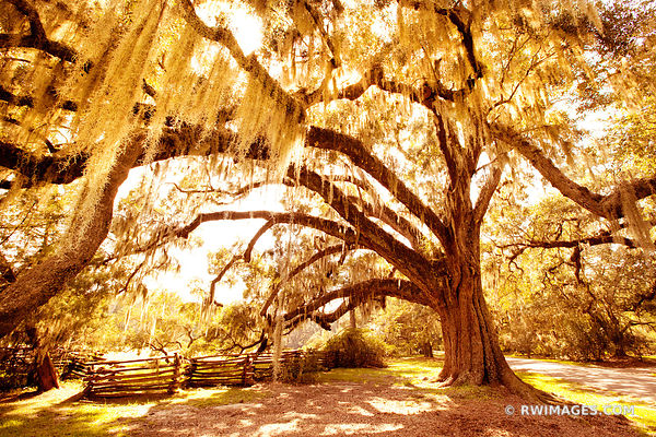 MAGNOLIA PLANTATION AND GARDENS CHARLESTON SOUTH CAROLINA COLOR