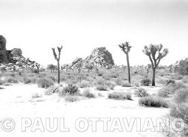 Joshua Tree Film Landscape | Paul Ottaviano Photography