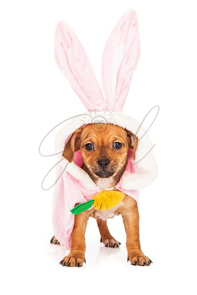Puppy Wearing Easter Bunny Costume