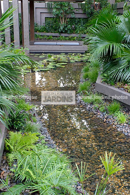 Contemporary garden, Exotic garden, Palm tree, Tropical garden, Water garden,
