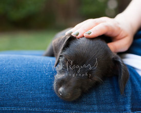 Woman petting black puppy head while sleeping on leg