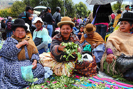 Aymara women chewing coca leaves ( Erythroxylum coca ) at an event promoting traditional uses of the coca leaf , La Paz , Bol...
