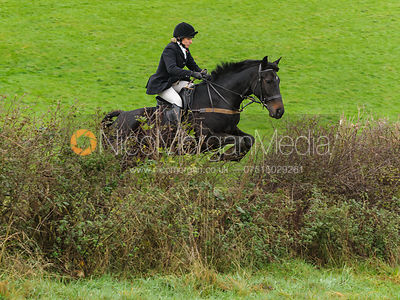 Jumping a hedge above Lovers' Walk - The Cottesmore Hunt at Tilton on the Hill, 9-11-13
