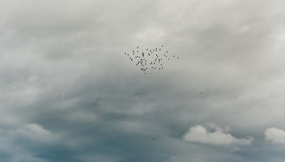 Flock of birds 2