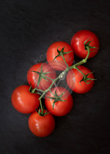 A cluster of tomatoes on vine against a black background.