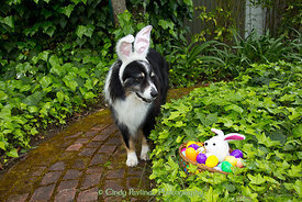 Easter Hunt Merlin