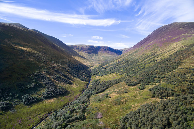 Forest regeneration in Carrifran. Part of Carrifran Wildwood, a replanting initiative led by the Borders Forest Trust, Moffat...