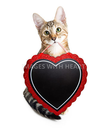 Cute Kitten Carrying Heat Valentines Day Sign