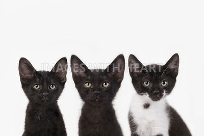 Three kittens sitting side by side