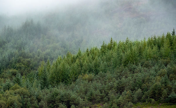 Forests of Ardnamurchan