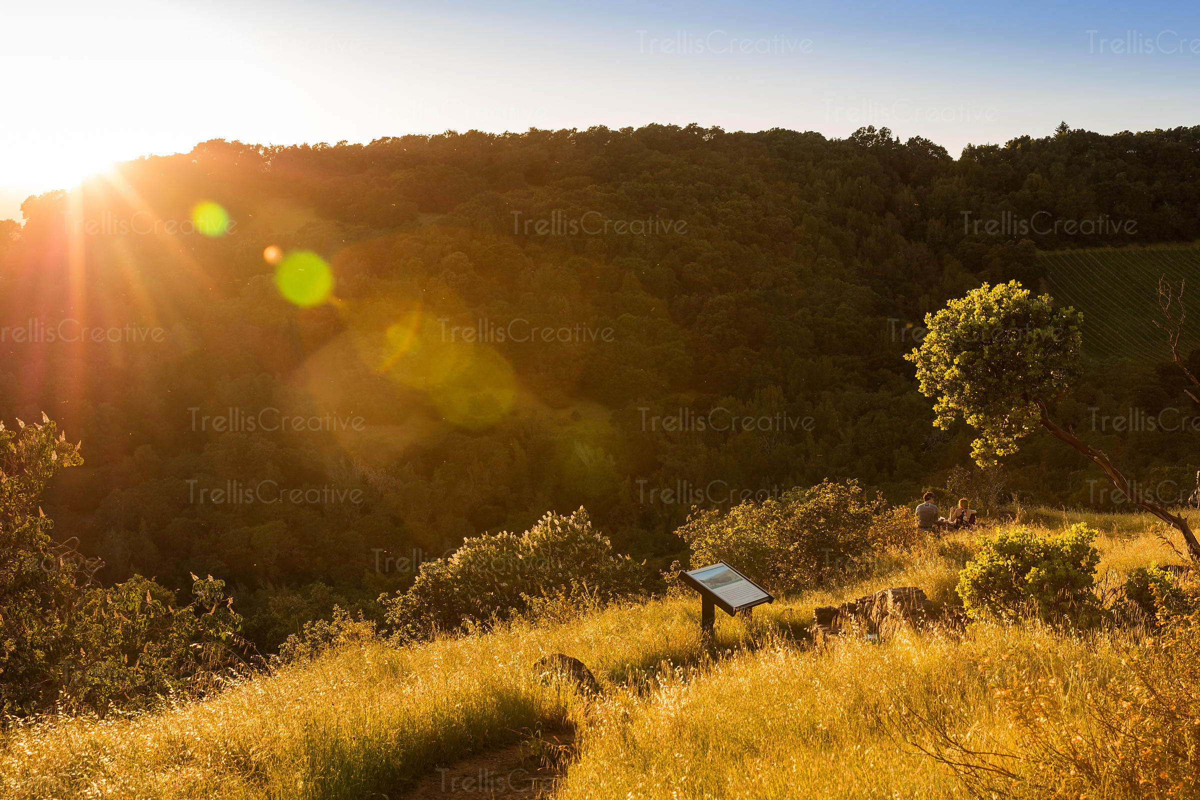 View of forest and grass field at hike at sunset with a sign on the path